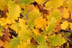 De bladerenachtergrond van de herfst Royalty-vrije Stock Foto