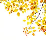 De bladerenachtergrond van de herfst in goud en rood Royalty-vrije Stock Foto