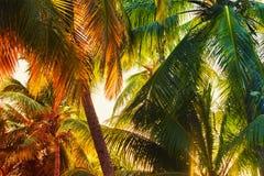 De bladerenachtergrond van de kokosnotenpalm Stock Fotografie