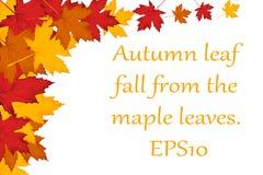 De bladerenachtergrond van de esdoorn EPS10 Royalty-vrije Stock Foto's