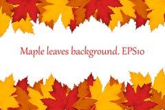 De bladerenachtergrond van de esdoorn EPS10 Stock Foto