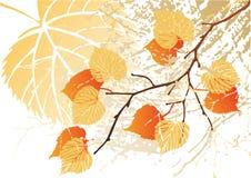De bladerenachtergrond van september Stock Fotografie