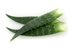 De bladeren van Vera van het aloë Stock Afbeeldingen