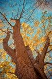 De bladerenbomen van de daling stock foto's