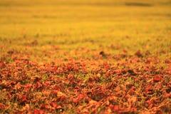 De bladerenclose-up van de herfst Stock Foto's