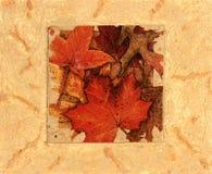 De bladerencollage van de herfst stock fotografie