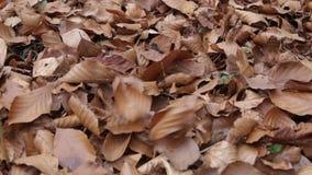 De bladerendaling aan de grond stock videobeelden