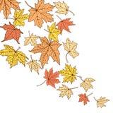 De bladerenmalplaatje van de kleurenherfst Stock Foto