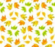 De bladerenpatroon van de de herfst kleurrijk esdoorn stock foto