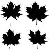 De bladerensilhouet van de esdoorn Stock Foto's