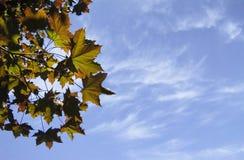 De bladerensilhouet van de zomer Stock Foto