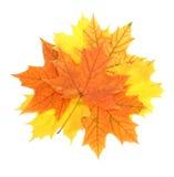 De bladerenstapel van de esdoorn Stock Foto's