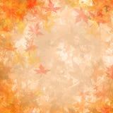 De bladerentextuur en achtergrond van de esdoorn. vector illustratie