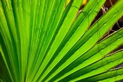 De bladerentextuur van het palmclose-up met schaduw Royalty-vrije Stock Afbeelding