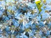 De blauwe abstracte achtergrond van gebiedsbloemen Royalty-vrije Stock Foto's