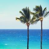 De blauwe achtergrond van strand oceaanpalmen Stock Foto