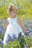De blauwe Baby van de Bonnet royalty-vrije stock afbeelding