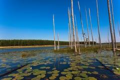 De Blauwe Bezinningen van het Meer van de Bomen van waterlelies   Stock Foto's