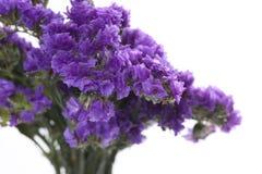 De blauwe bloem. Stock Afbeeldingen