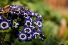 De blauwe bloem is glanst Stock Afbeeldingen