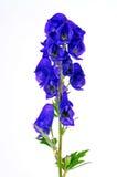 De blauwe bloem van de monnikskapinstallatie royalty-vrije stock fotografie