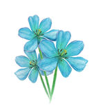 De blauwe bloem van de tulpenwaterverf Royalty-vrije Stock Foto's