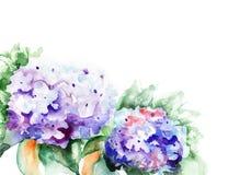 De blauwe bloemen van de hydrangea hortensia Stock Foto