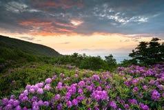 De blauwe Bloemen van de Lente van de Zonsondergang van de Bergen van het Brede rijweg met mooi aangelegd landschap van de Rand