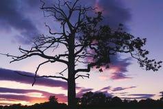 De blauwe boom van het hemelskelet Stock Afbeeldingen