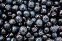 De blauwe bosbessen van bosbessen (myrtíllus Vaccínium) stock fotografie