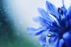 De blauwe close-up van de Bloem Lege ruimte voor een tekst royalty-vrije stock foto's