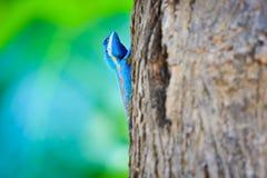 De blauwe draak beklimt de boom op kleurrijke achtergrond Stock Foto's