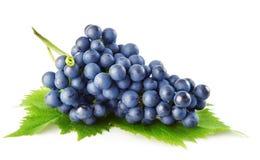 De blauwe druif met groene bladeren isoleerde fruit Stock Afbeeldingen