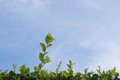 De blauwe hemel de bodem is groene boom stock afbeeldingen