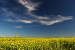 De blauwe hemel en de wolk en cole bloeien Stock Afbeelding