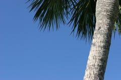 De blauwe hemel van de palm treewith. Stock Foto