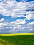 De blauwe hemel van het tarwegebied Stock Afbeeldingen
