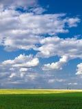 De blauwe hemel van het tarwegebied royalty-vrije stock afbeelding