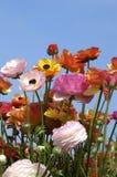 De blauwe hemel van Wildflowers Stock Fotografie