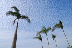De blauwe hemel zoals schaal Stock Foto's