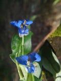 De blauwe herfst Stock Foto