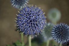 De blauwe Irisatie van de Gloed stock afbeeldingen