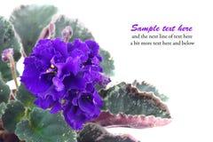De blauwe kaart van de bloemengroet Royalty-vrije Stock Afbeeldingen