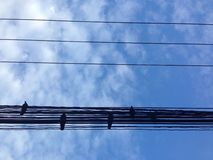 De blauwe kabel van de vogelhemel Royalty-vrije Stock Afbeeldingen