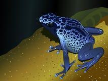 De blauwe kikker van het vergiftpijltje - dendrobates-Pumilio op donkerblauwe achtergrond Stock Foto's