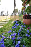 De blauwe Lente Stock Foto