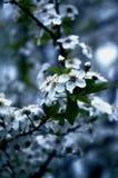 De blauwe lente Royalty-vrije Stock Foto's