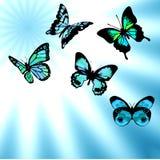De blauwe lucht van vlinders stock illustratie