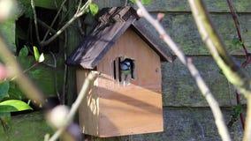 De blauwe tuin van het de vogelhuis van de meesdoos stock footage