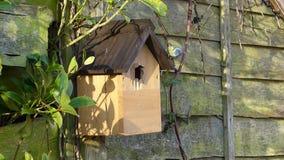De blauwe tuin van het de vogelhuis van de meesdoos stock videobeelden